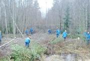 Требуются бригады вальщиков леса